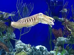 Georgia snorkeling images Just like snorkeling picture of georgia aquarium atlanta jpg