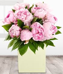 peony flower delivery peonies pink peony aquapack gift bag flower bouquet