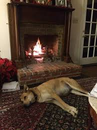 the world u0027s most recently posted photos of dog and fireplace