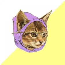 Cat Meme Maker - hipster kitty meme generator imgflip