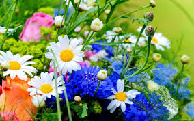 spring flower spring flowers android apps on google play