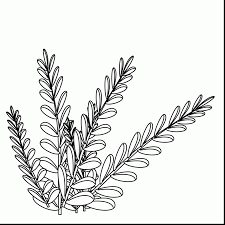 extremely creative ocean plants coloring pages coral reef page