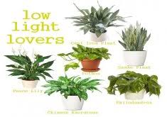 house plants no light indoor office plants no light home design photo gallery
