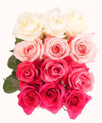 roses colors color meanings what color to give everyone in your
