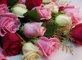 send flowers cheap send flowers cheap send flowers cheap wallpaper garcinia