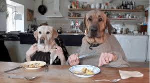 dogs at dinner table 16 things you know if you grew up with dogs cuteness