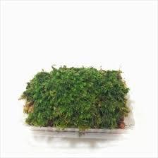 terrariums moss price harga in malaysia