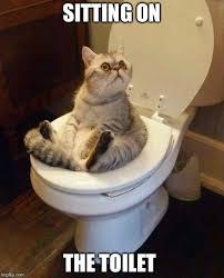 Meme Toilet - toilet cat meme generator imgflip