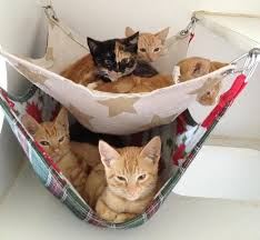 20 brilliant ways to organize your cats cat hammock hammocks