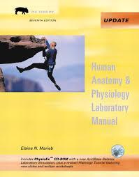 Human Anatomy And Physiology Marieb 7th Edition Human Anatomy And Physiology Lab Manual Worksheets Body U0026 Anatomy