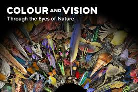 london u0027s natural history museum invites you to explore color in
