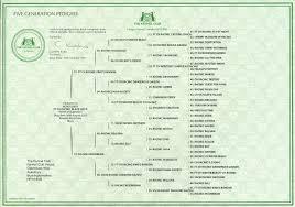 pedigree certificates take pride in your dog u0027s heritage u2013 the