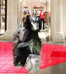 afghan hound club of st louis afghansonline com home facebook