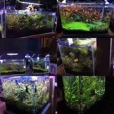 nature aquarium aquascaping pet zone tropical fish san diego