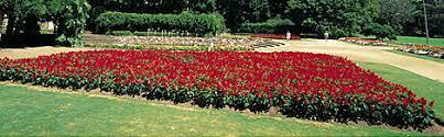 garden u0026 flower shows in sydney australian garden show u0026 more