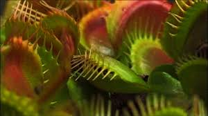 what plants talk about about nature pbs