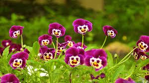 Beautiful Flowers Refreshing And Beautiful Flowers Wallpapers Travelization
