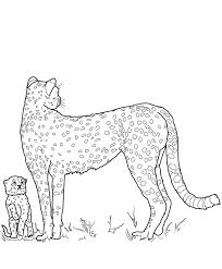 cheetah family coloring pages animal coloring pages of