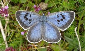 killer of butterfly given six month suspended sentence