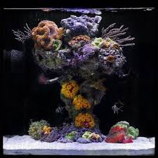 Live Rock Aquascaping Ideas The 25 Best Reef Aquascaping Ideas On Pinterest Nano Reef Tank