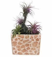 giraffe ceramic rectangle planter living air plant tillandsia