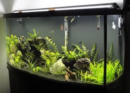 10 gallon planted tank led lighting amazon com finnex ray2 aquarium led daylight 36 inch aquarium