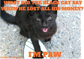 Meme Joke - halloween joke black cat meme 2 what did the black cat say when he