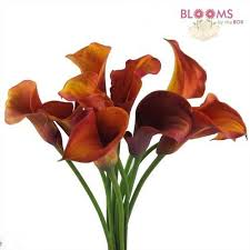 Bulk Flowers Online Wholesale Calla Lily Flowers Online U2013 Bloomsbythebox Com