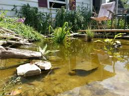 How To Build A Fish Pond In Your Backyard Robert Brumm U0027s Blog Robert Brumm