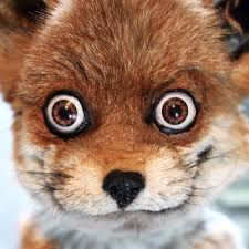 Taxidermy Fox Meme - crap taxidermy craptaxidermy twitter
