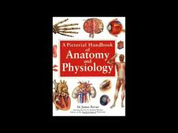 Anatomy And Physiology Pdf Books A Pictorial Handbook Of Anatomy Physiology Pdf Book Youtube