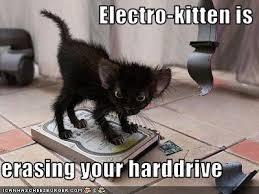 Laptop Meme - electro kitten is erasing your harddrive cheezburger funny memes