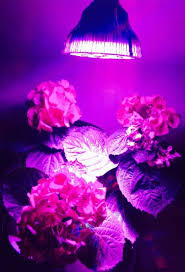 horticultural led grow lights small ufo par led grow light 54w for horticulture led grow lighting