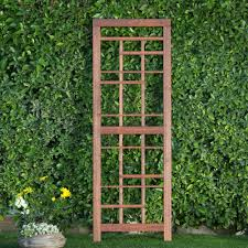 coral coast halstead wood trellis give leggy flowers and