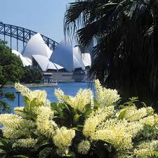Botanic Garden Sydney Margaret And