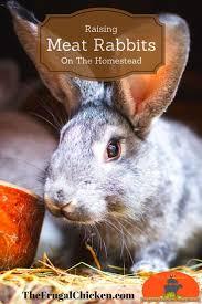 best 25 raising rabbits ideas on pinterest rabbit food meat