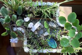 Winter Indoor Garden - keep gardening this winter with indoor miniature gardens the
