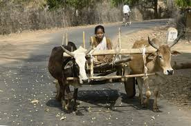 indian cart file on bullock cart umaria district mp india jpg
