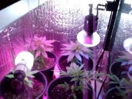 Best 25 Marijuana Grow Lights by Led Grow Lights No Hps Medical Marijuana Pot Cannabis Hemp