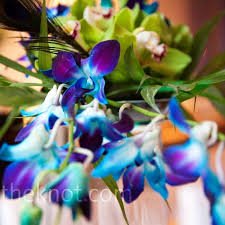 Orchid Centerpieces Blue And Green Orchid Centerpieces