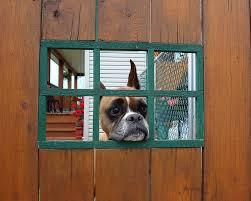 boxer dog training tips boxer puppy training the everything dog site