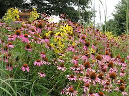 native plant definition tennessee smart yards native plants a comprehensive database of