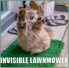 Invisible Cat Memes - cat mowing with invisible lawnmower funny cats pinterest cat