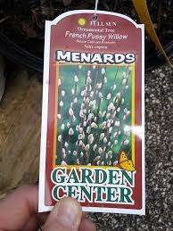 Fresh Cut Christmas Trees At Menards by French Willow How Big Will It Get