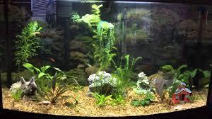 Aquarium Decoration Ideas Freshwater Cuisine Best Aquarium Design Aquarium Design Decorating Best
