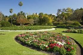City Botanic Gardens Flower Garden City Botanic Gardens Brisbane Queensland Australia