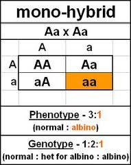 inheritance pattern quizlet genetics patterns of inheritance flashcards quizlet