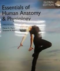 Essentials Of Human Anatomy And Physiology Notes 9780134395326 Essentials Of Human Anatomy U0026 Physiology 12th
