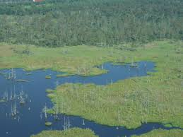 Wetland Resources Of Washington State by Louisiana Wetlands Struggling With Sea Level Rise 4 Times The