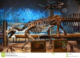 perot museum fossils editorial stock image image of historic